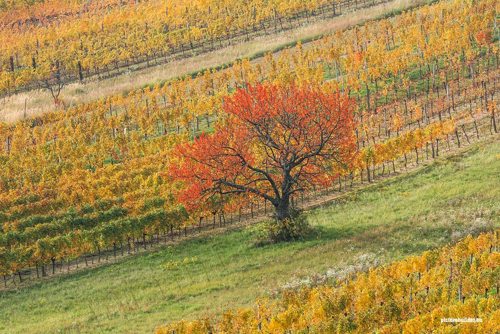 Herbst am Neusiedler See
