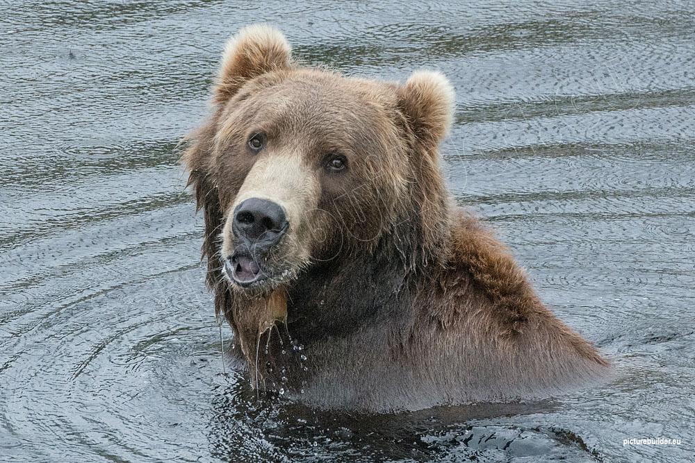 Bärenpark Orsa